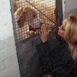 Pamela Anderson posetila sklonište za napuštene životinje