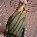 Teodora se priseća svog papagaja Mićka