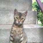 Peđina graciozna mačka Nina