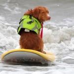 Plaža u Kaliforniji za vikend pripala psima surferima