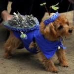 Maskenbal nije samo za ljude: blesavi kostimi za pse