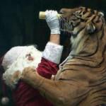 Hrabri Deda Mraz spremio poklone i za tigrove