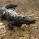 Krajnje originalno: Elthon John dobio krokodila za rođendan
