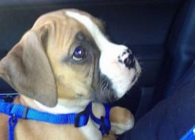 Khloe puppy 8002