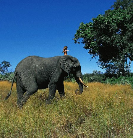 real-life-mowgli-tippi-degre-african-wildlife-16-450x469