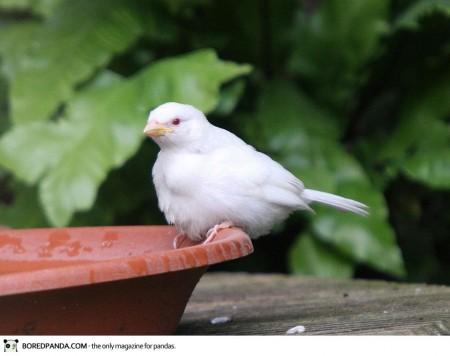 albino-animals-10-3-450x356