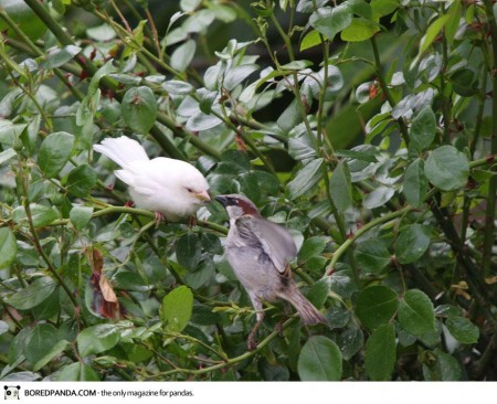 albino-animals-10-4-450x366