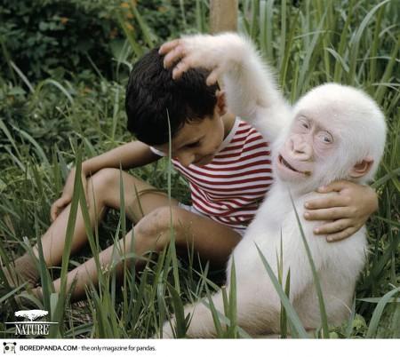 albino-animals-12-450x402