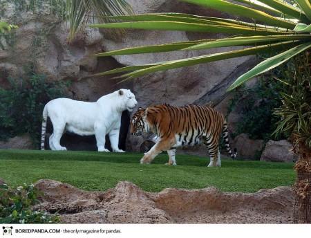 albino-animals-14-450x344