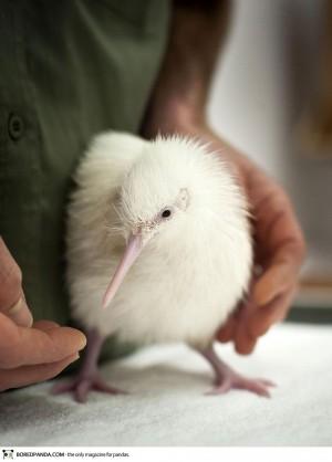albino-animals-15-300x418