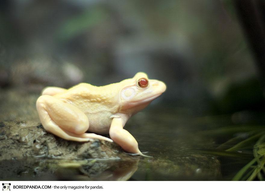 albino-animals-19