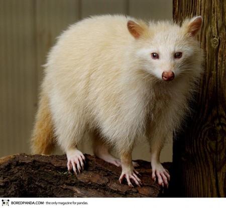 albino-animals-23-450x413