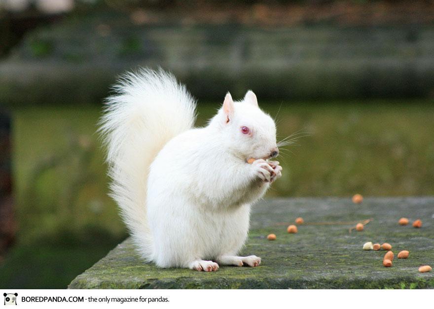 albino-animals-3