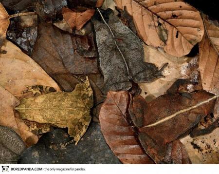 animal-camouflage-12-450x357