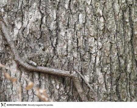 animal-camouflage-13-450x357