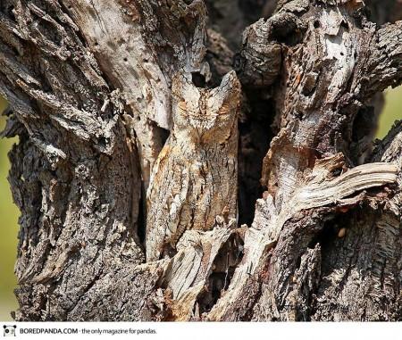 animal-camouflage-4-450x381