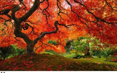 autumn-photography-1-490x333