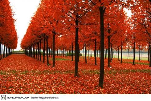 autumn-photography-10-490x328