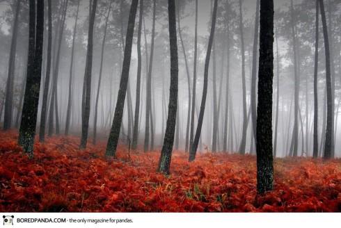 autumn-photography-11-490x328