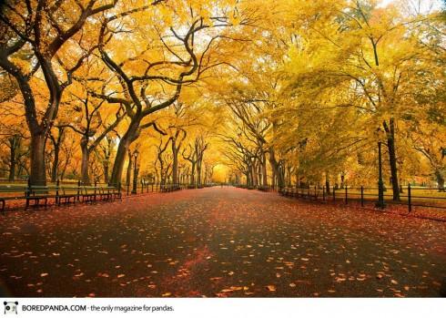 autumn-photography-13-490x349