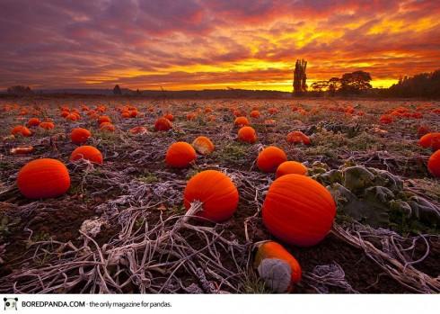 autumn-photography-14-490x349