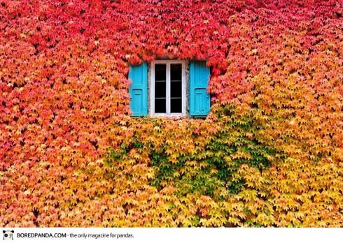 autumn-photography-2-490x348