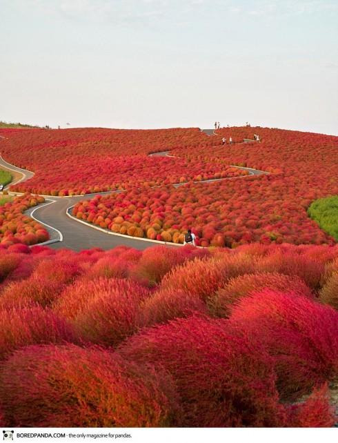 autumn-photography-3-490x642