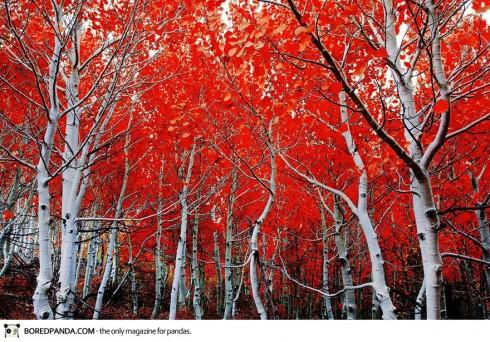 autumn-photography-5-490x342