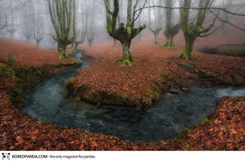 autumn-photography-7-490x324