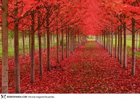 autumn-photography-8-490x349