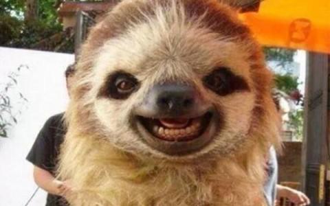 cute-smiling-animals-251-490x386