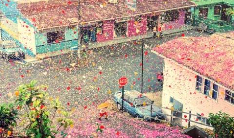 flower-petals-sony-4k-ultra-hd-advertisement-campaign-costa-rica-1-490x289