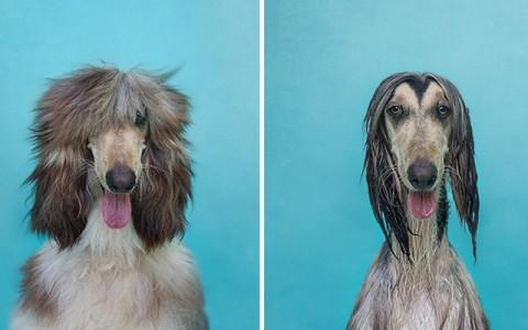 animal-portraits-dry-wet-dog-serenah-hodson-2