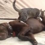 Sweet: Mace nerviraju pse!
