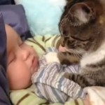 Cute: Mace i bebe – najbolji prijatelji!