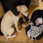 SWEET: Ljubimci upoznaju bebe!